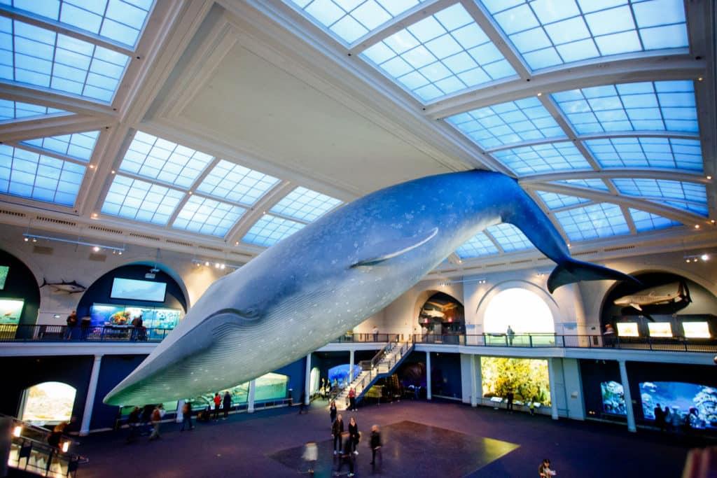 Museo de Ciencias y Memorial 9-11   Nueva York