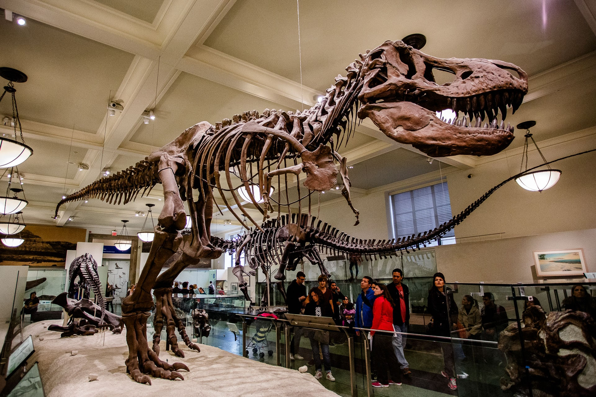tiranosaurio rex museo ciencias nueva tork
