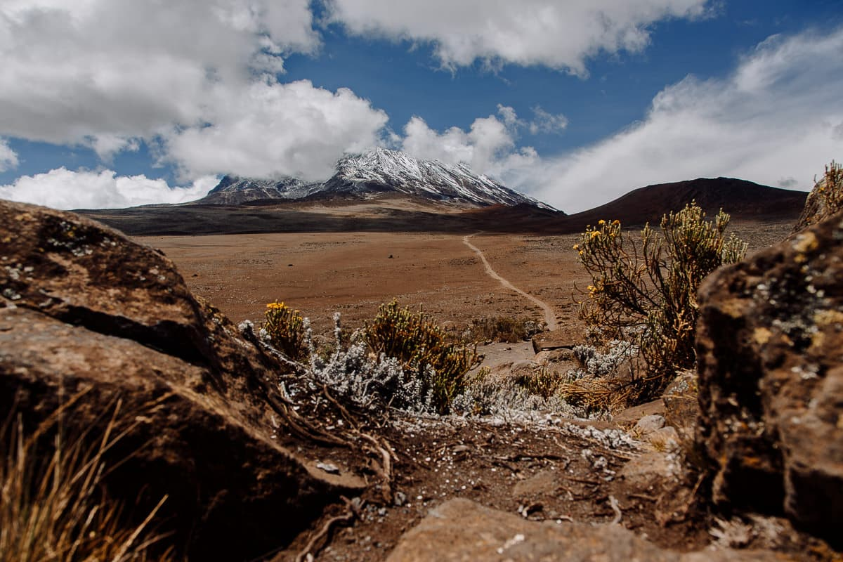 Día 6 | Horombo (3700 mts) –Puerta Marangu (1840 mts) | Kilimanjaro