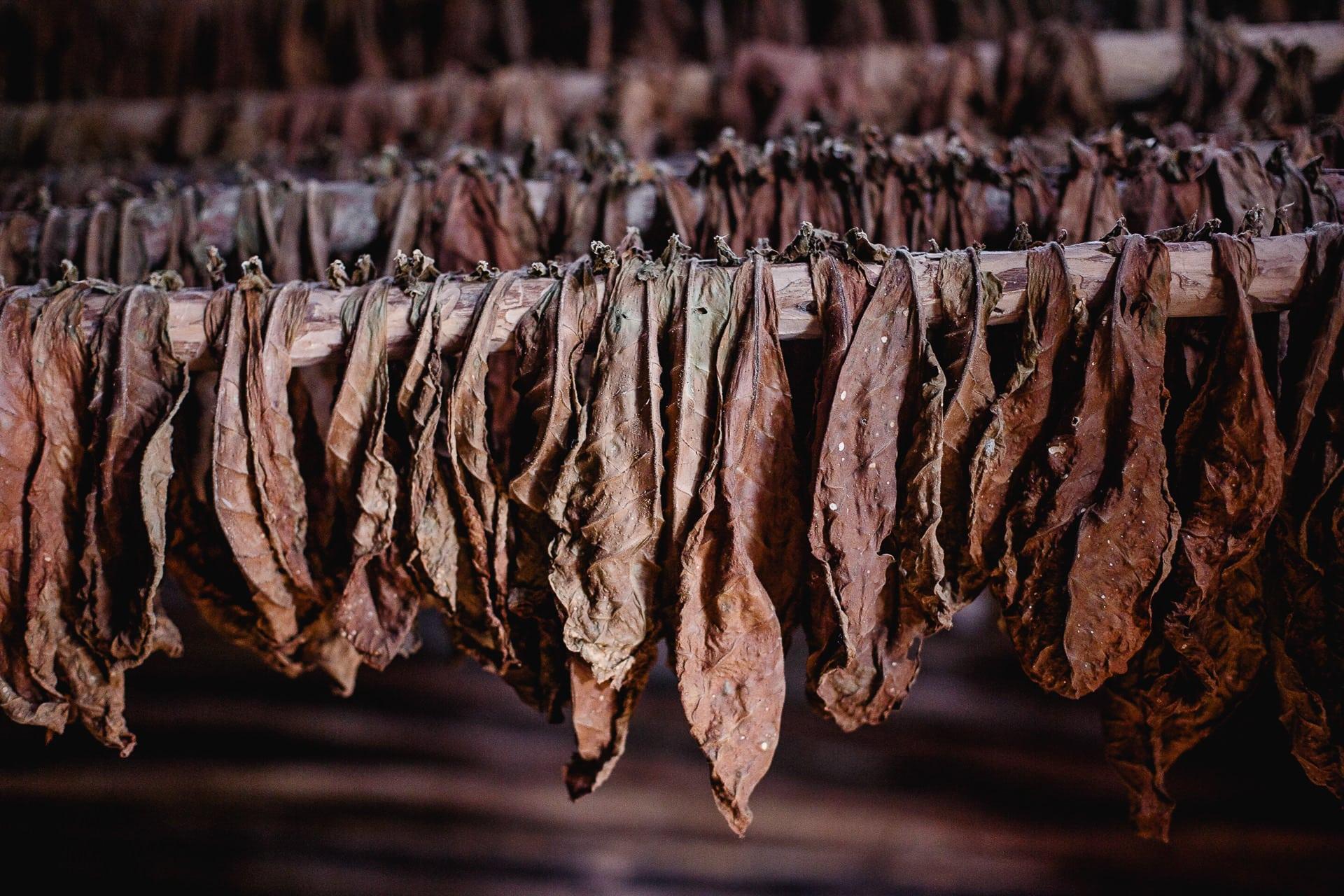 Viñales Cuba Tabaco112739