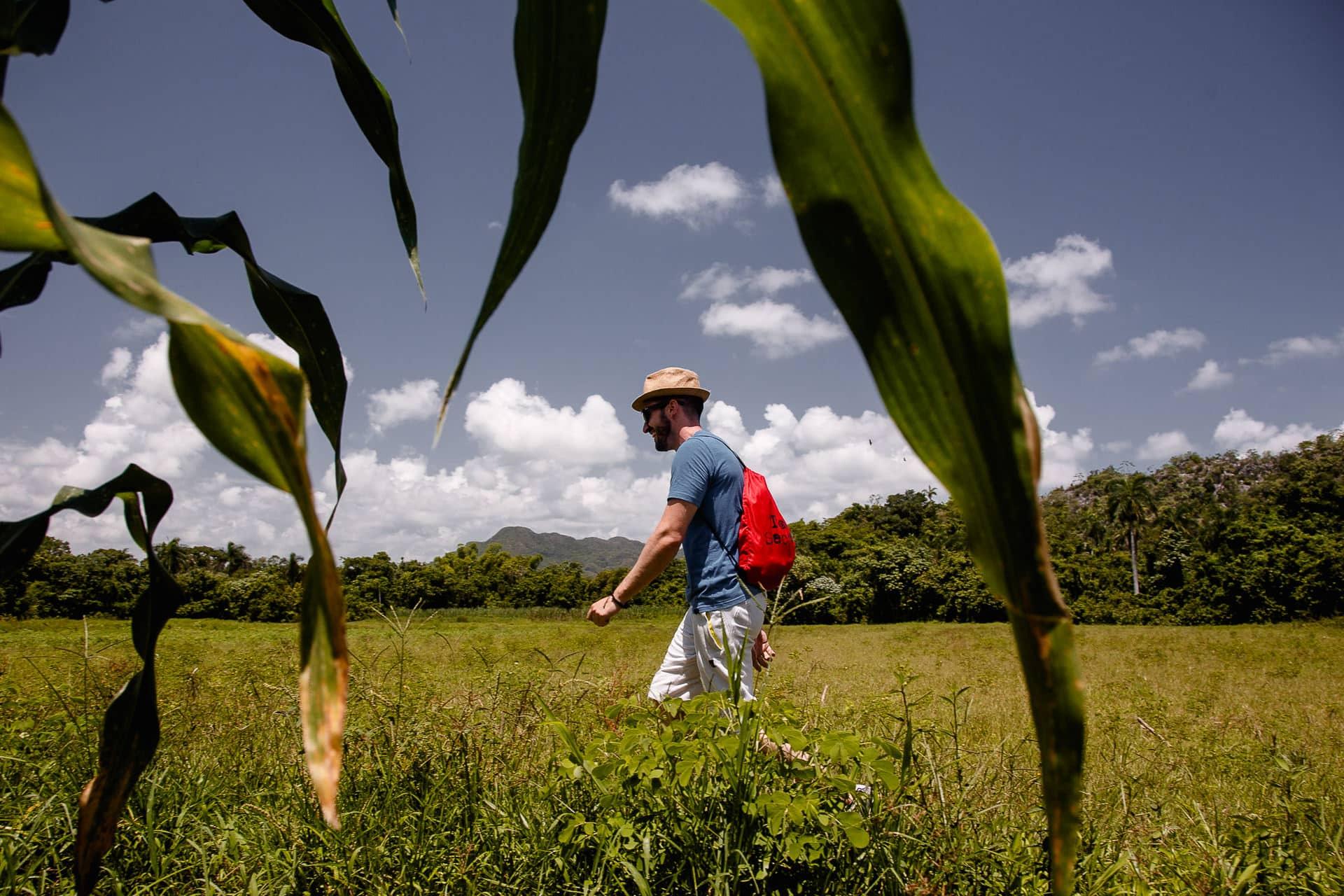 Viñales Cuba Tabaco124004